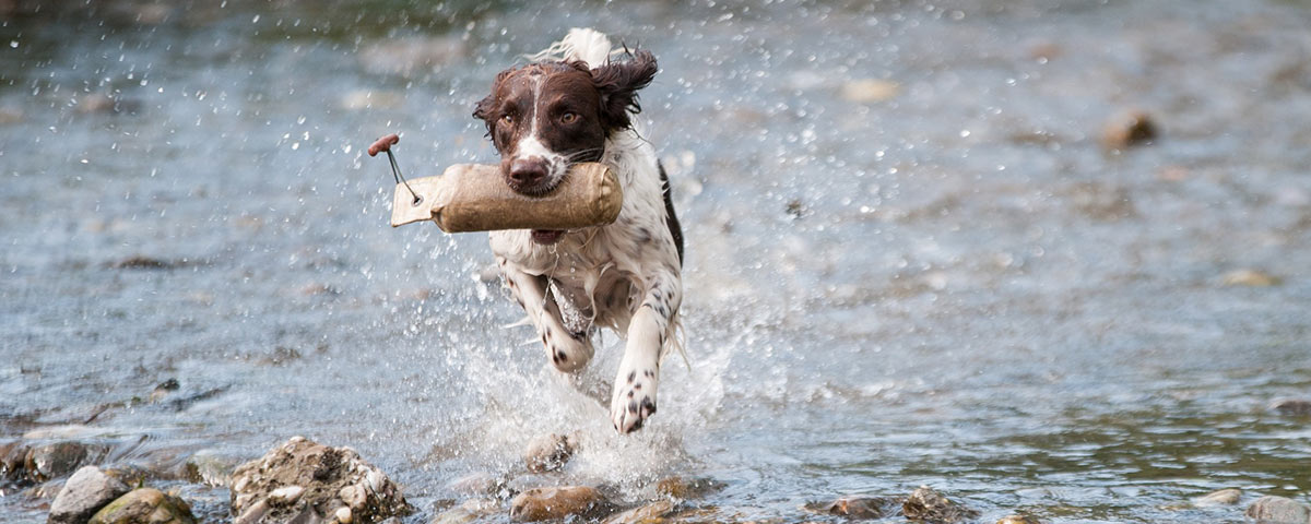 Embark Celebrates the Olympics: Are dogs more athletic than their owners?