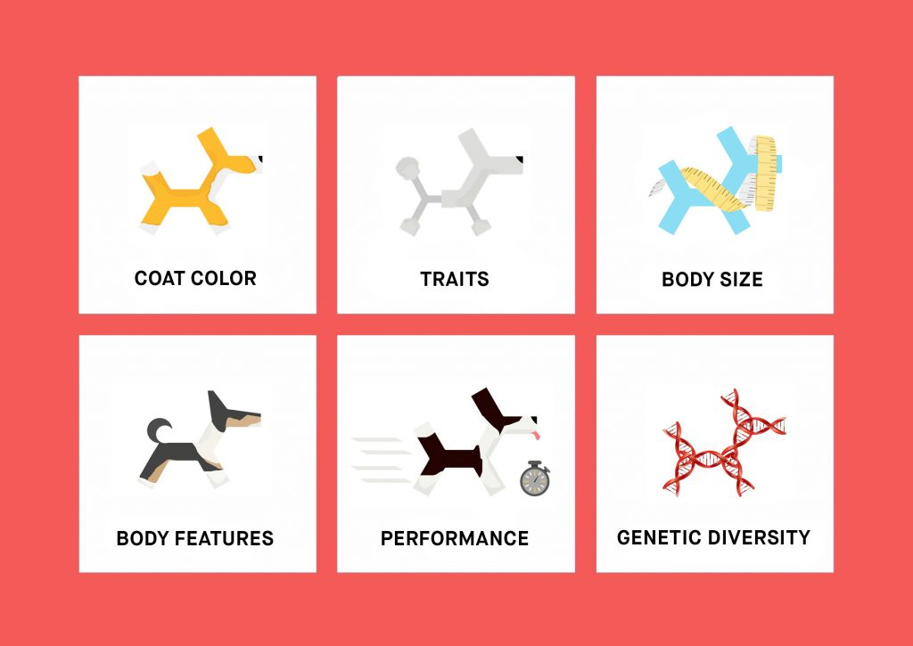 Dog Traits DNA Kit   Test for Coat Color, Dog Size and ...
