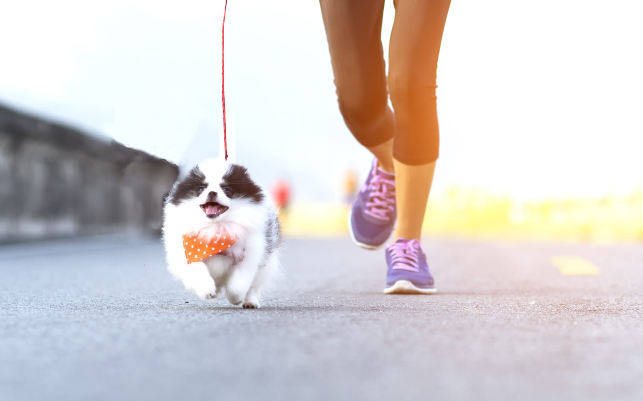 Top Tips for Running With Your Dog in the Summertime