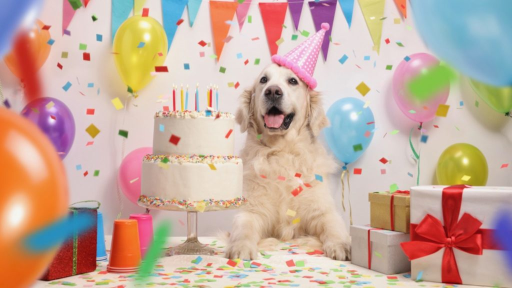 A Gift Guide For Your Dogs Birthday