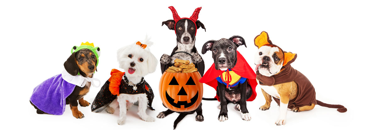 Best Dog Halloween Costumes For Your Pup | Embark Dog DNA Test
