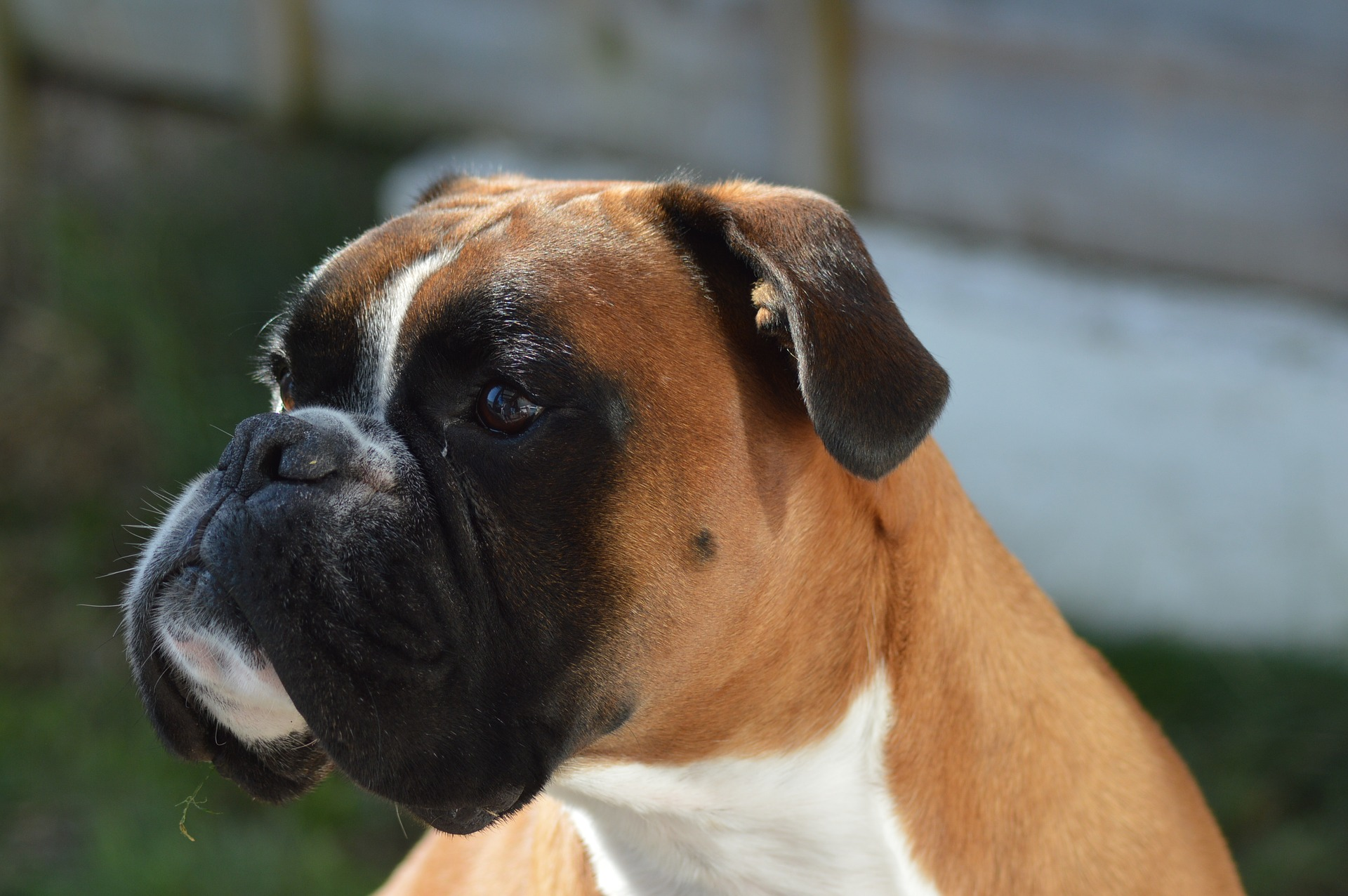 embark guide to boxers 3