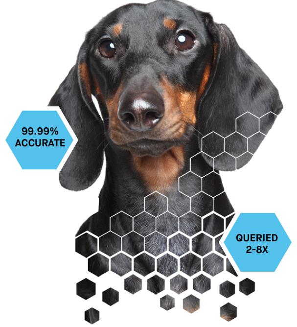 Embark for Breeders Dog DNA Test Kit | Preserving your legacy