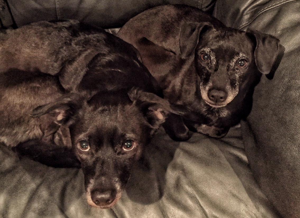 embark sibling rescues