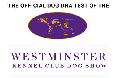 Embark for Breeders Dog DNA Test Kit | Preserving your legacy