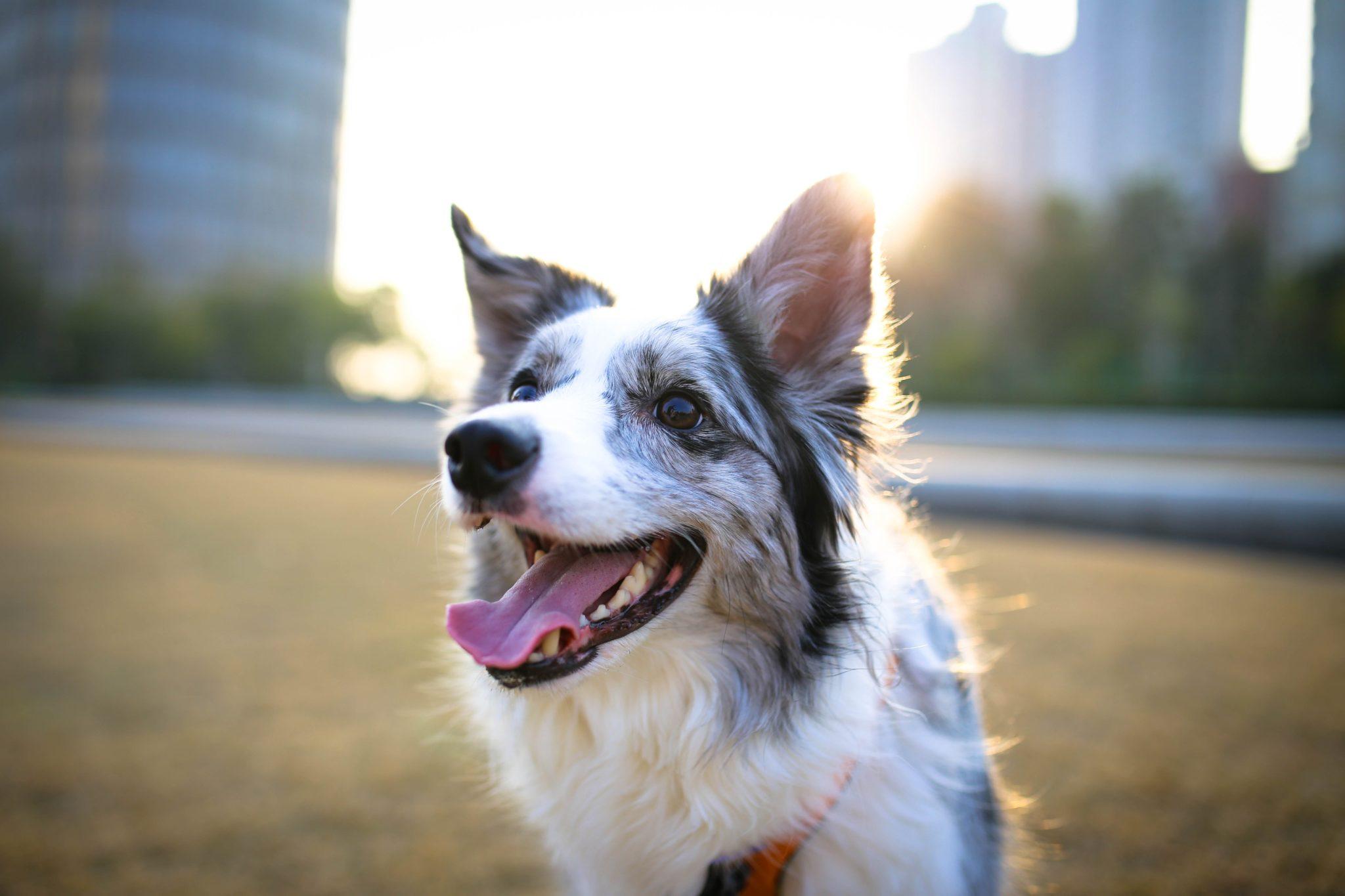 embark dog greenway