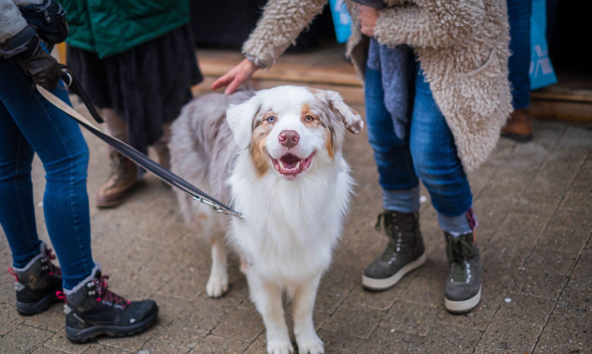 embark dog smiles