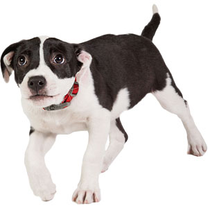 Dog Inbreeding, Its Consequences, And Its Quantification | Embark