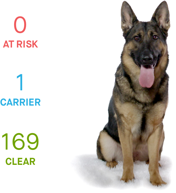 Kira Embark DNA test results health