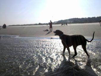 embark burkes beach