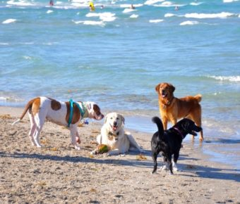 embark hollywood dog beach