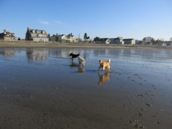 embark jeness beach