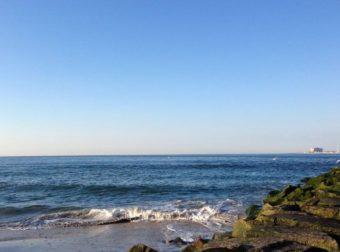 embark longport dog beach