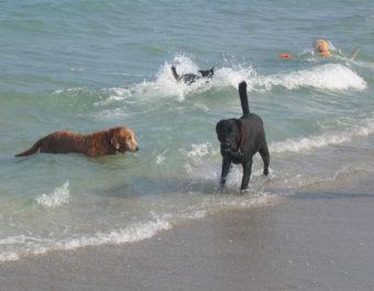 embark walton rocks dog beach
