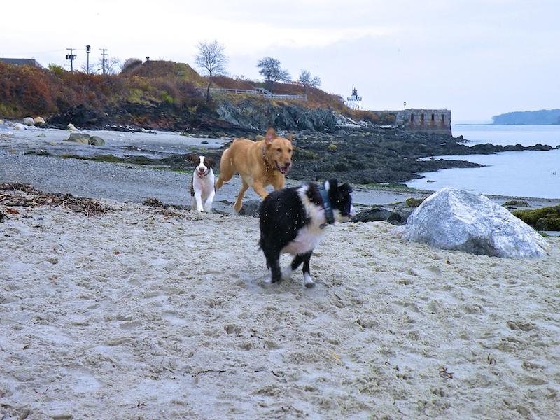 embark willard beach