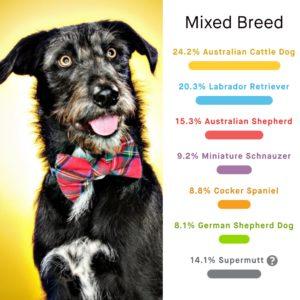 breed_identification