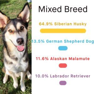 breed_identification3