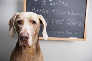 dog-chalkboard