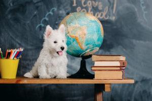 dog-classroom
