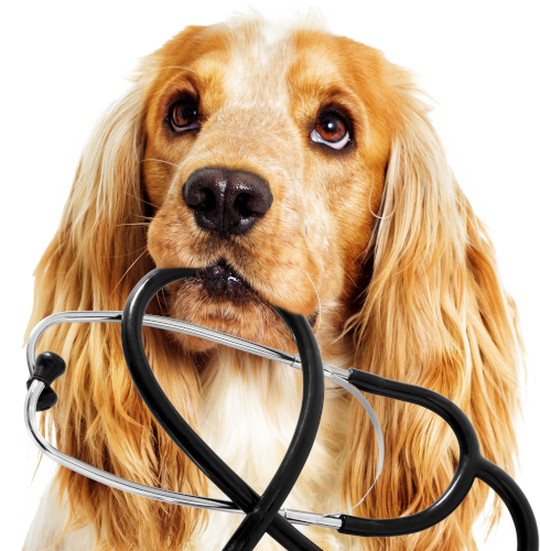 Embark Tests For Over 170 Health Conditions | Dog Health