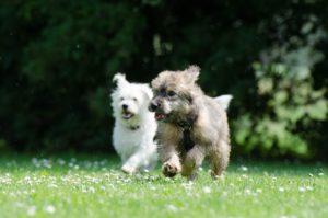 pups-racing