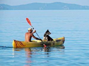dog_kayak