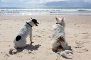 dogs_dog_beach