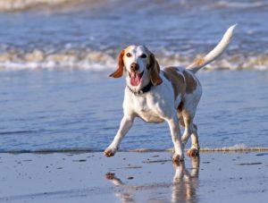 happy_dog_beach