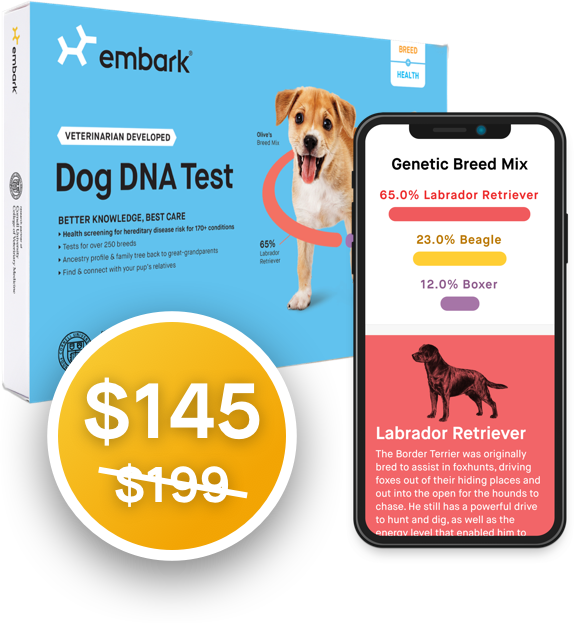 Embark Dog Dna Test Most Accurate Highest Reviewed Dog