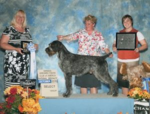 #1 German Wirehaired Pointer by Breed Points in the Country in 2014