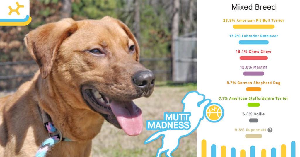 william breed results mutt madness