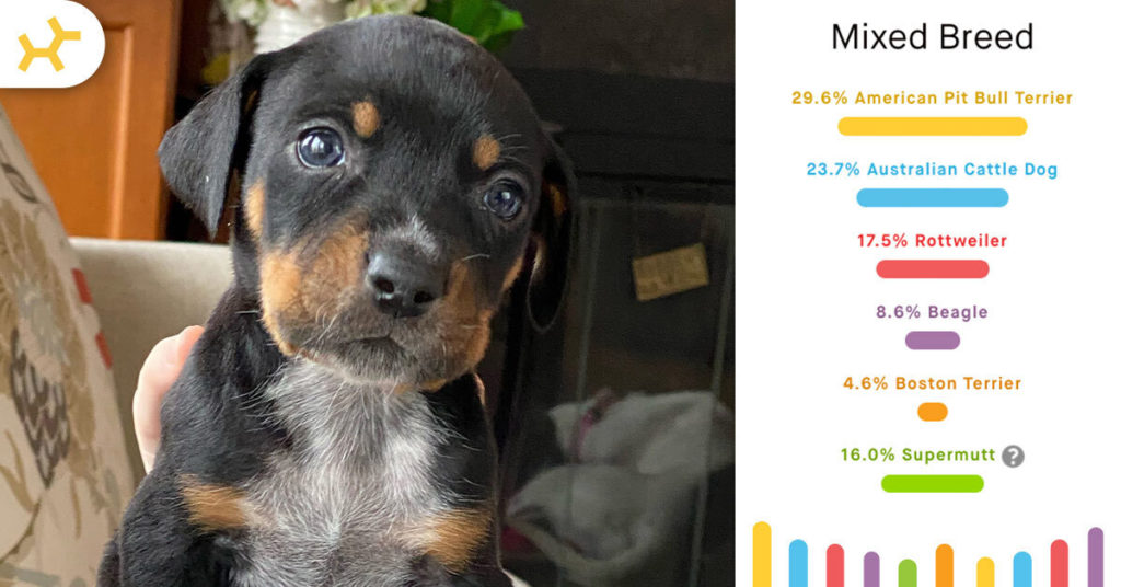 macho man puppy breed results
