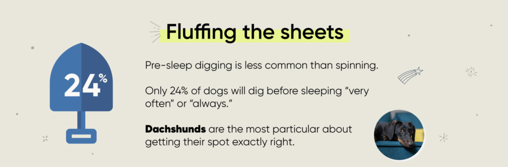dog sleeping habits infographic digging