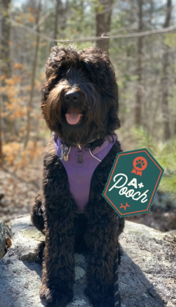 camp embark dog with badge