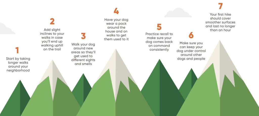 Tips for preparing your dog to hike
