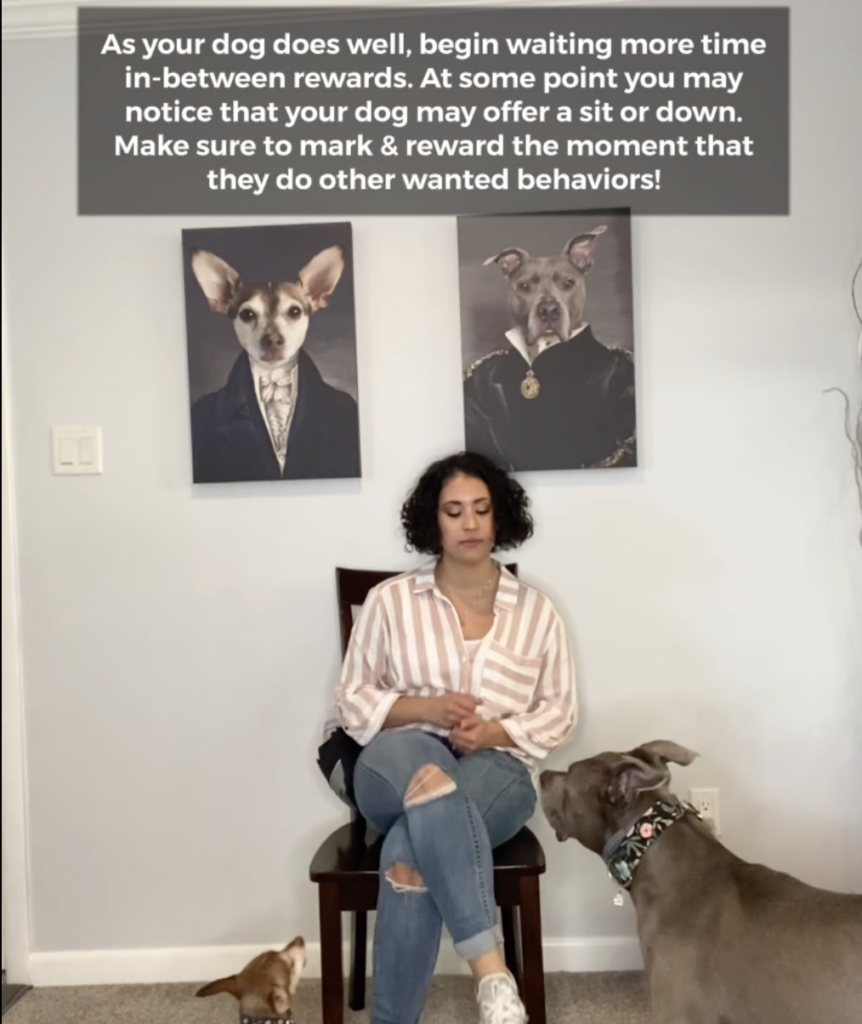 erika dog trainer sitting in front of dogs