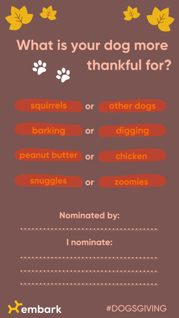 what is your dog more thankful for? graphic