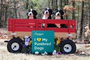 National Purebred Dog Day Sign
