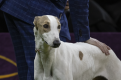 embark-westminster-greyhound