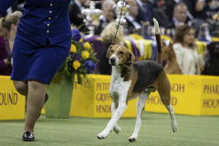 embark-westminster-hound-group